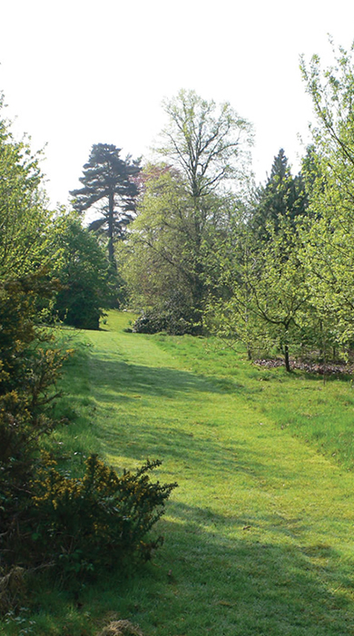 Photo of Woodland Burial area