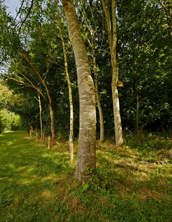 Trees in Woodland area