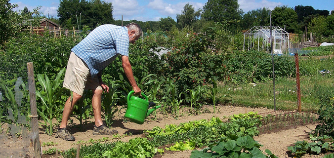 Man working in allotments