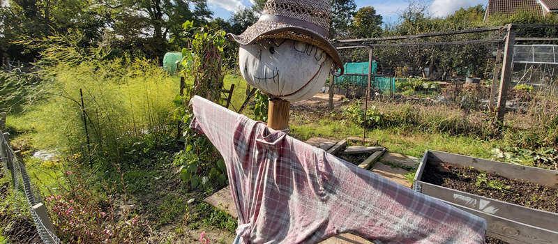 Scarecrow at allotments