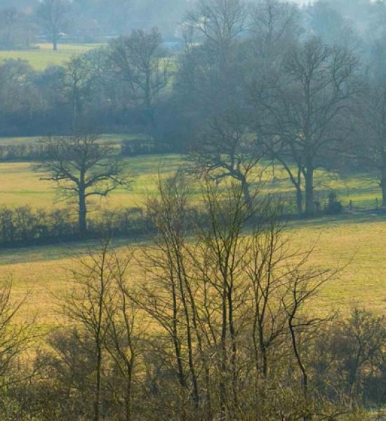 Photo of woodland